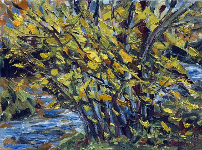 Golden Leaves & Creek at Doe Farm