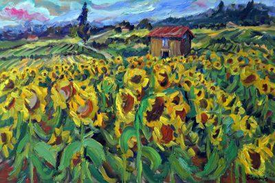 Sunflower Fields & Cabin